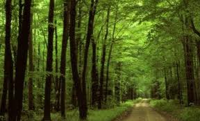 Virgin Forest | Truth About Romania